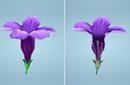 Characteristics of Flowers